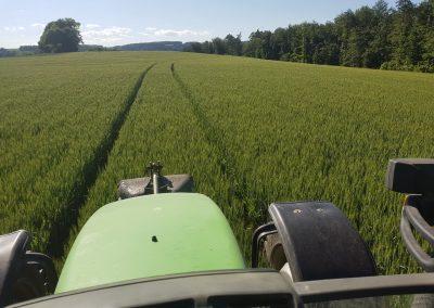 Landwirtschaft-Pflanzenbau-Feld