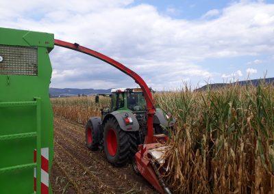 Landwirtschaft-Pflanzenbau-Kemper