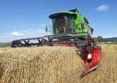 Landwirtschaft-Pflanzenbau-Weizen